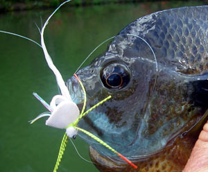 Click to see comments on the stealth from other anglers...