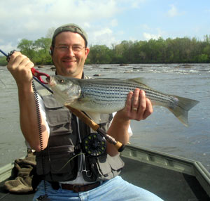 Chattahoochee River striper on the fly rod